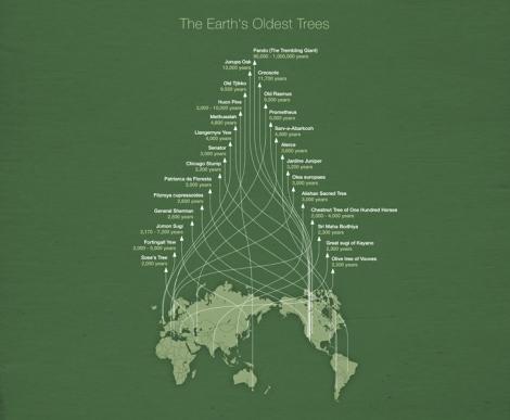 earths-oldest-trees-infographic-Michael-Paukner