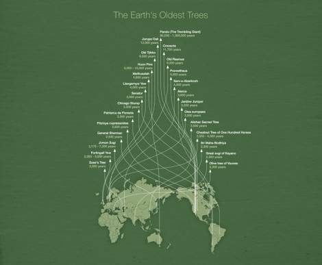 earths-oldest-trees-infographic-Michael-Paukner