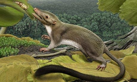 First placental mammal