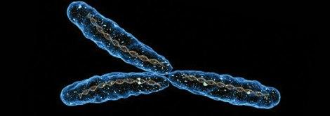 y_chromosome_wide