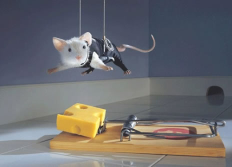 most-intelligent-animal-smart-mouse