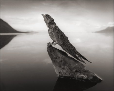 killer-lake-bird-statues-4